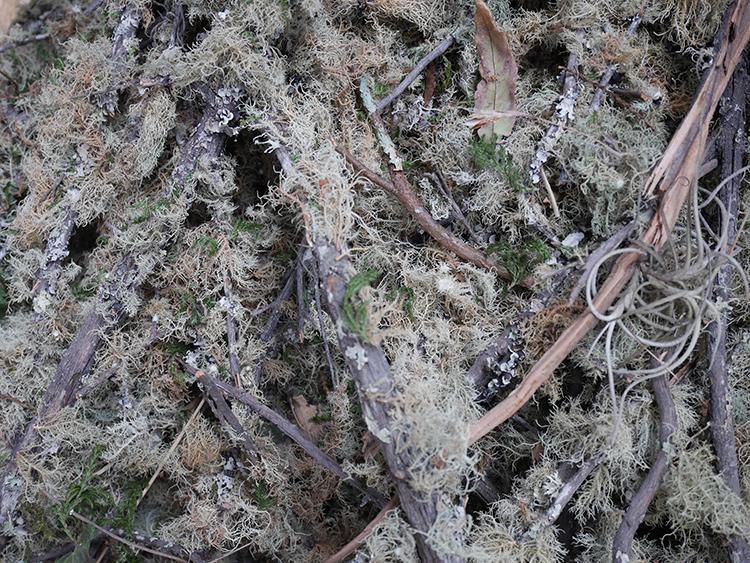 invasive plant dye